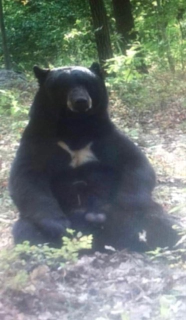 nina bear hunt 2