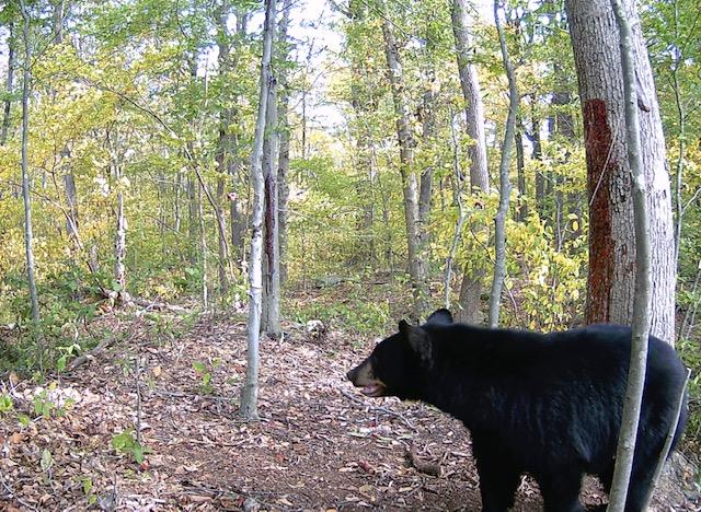 nina bear hunt 3