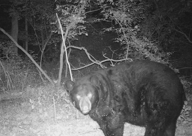 nina bear hunt